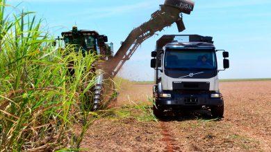 Brazilienii transportă trestia de zahăr cu un camion autonom Volvo