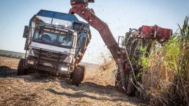 Trestia de zahăr recoltată în Brazilia cu ajutorul camioanelor automate